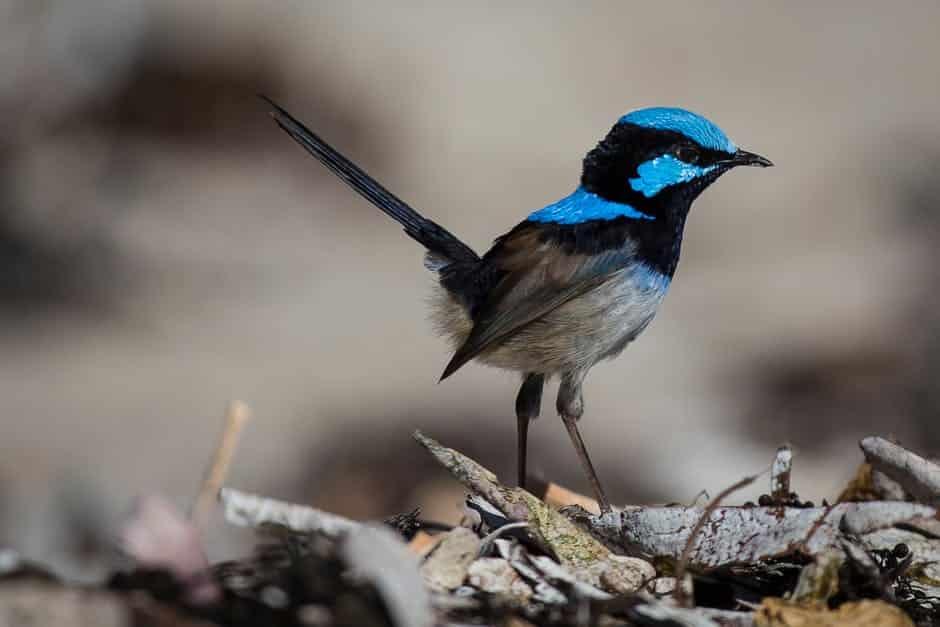 تحميل صور طيور 2017