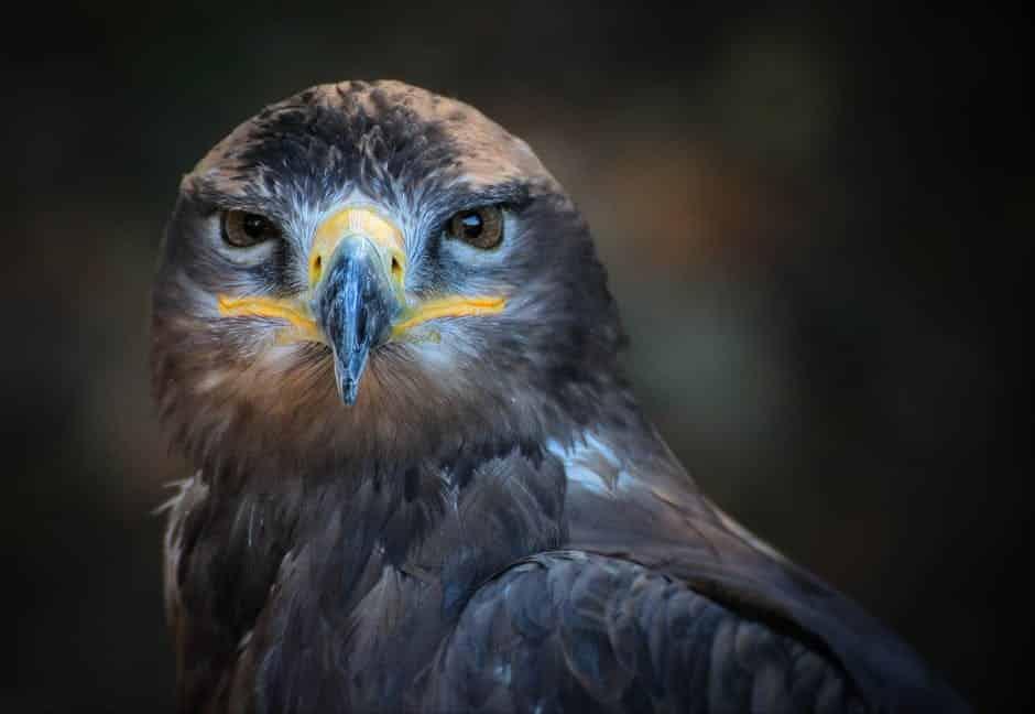 صور طيور 2017 حلوة