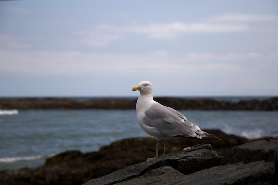 صور طيور 2017 جميله