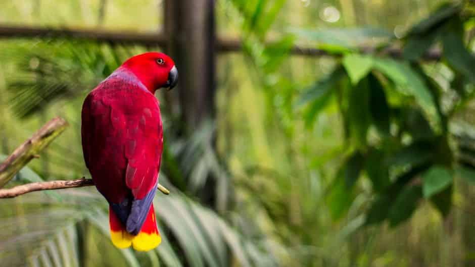 صور طيور متنوعة