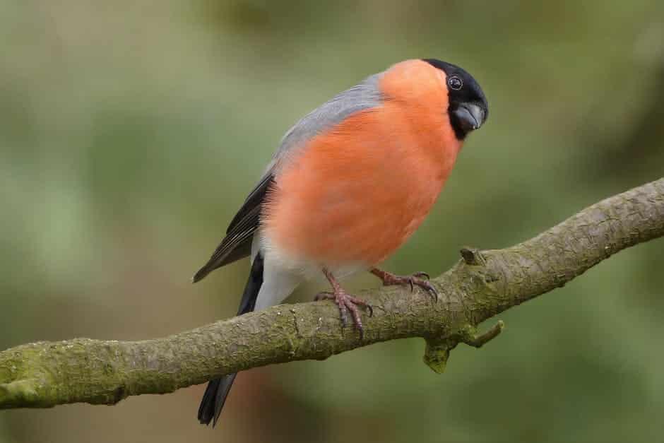صور طيور كشخه