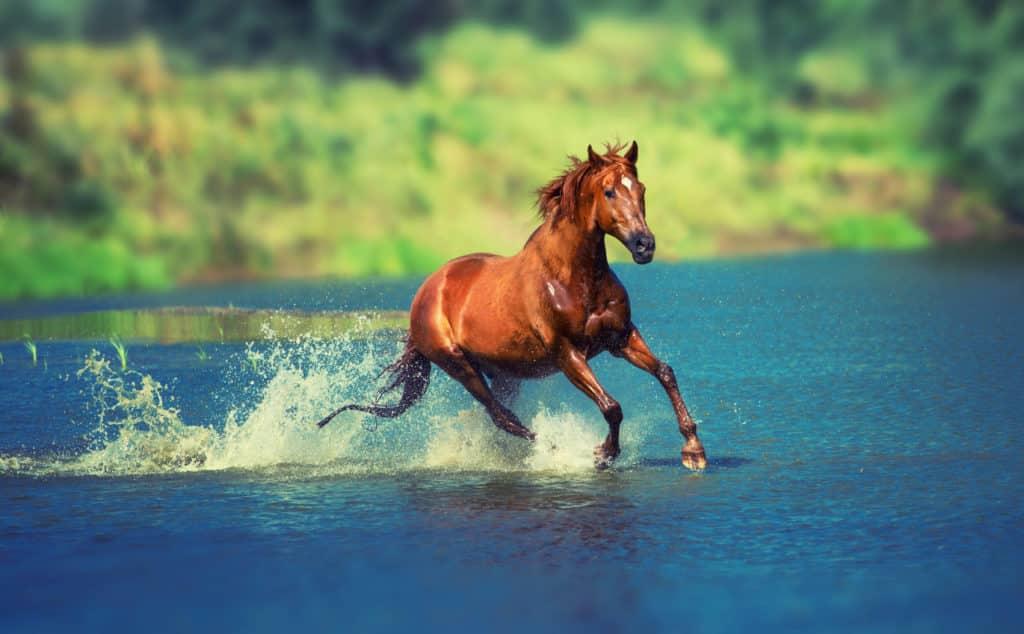 تنزيل صور خيول