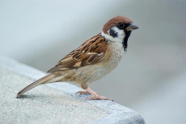 صور طيور جديدة