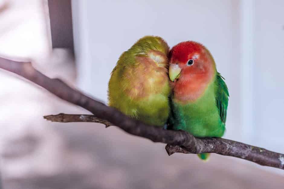 صور طيور للفيس بوك