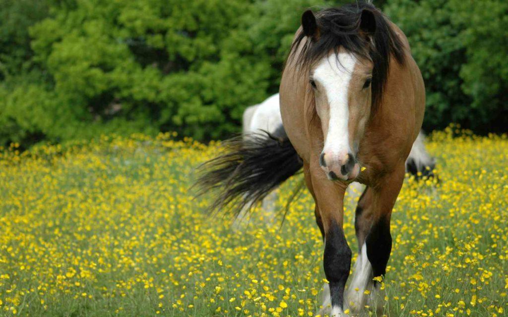 صور خيول جديدة