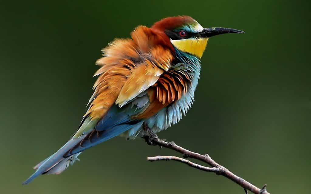 صور طيور روعة