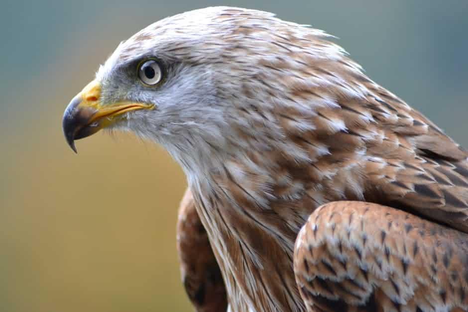 صور طيور منوعة