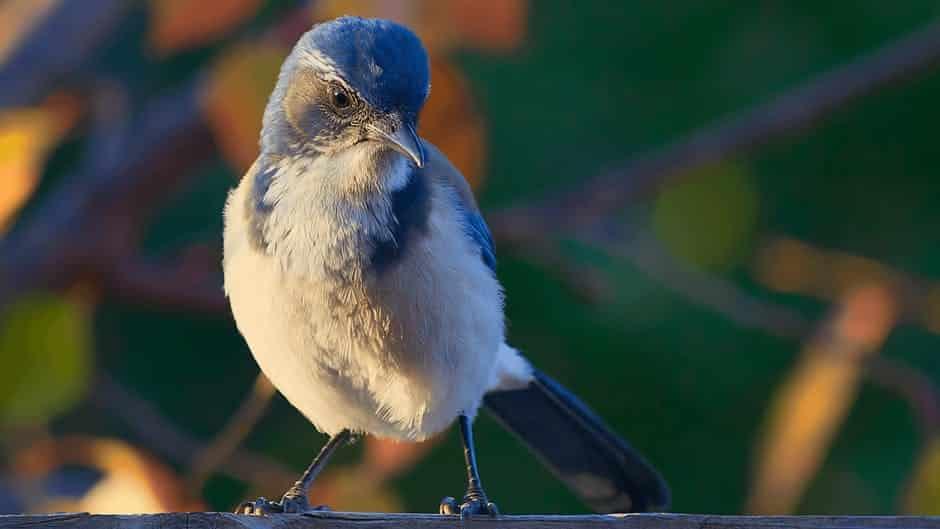 صور طيور حلوة