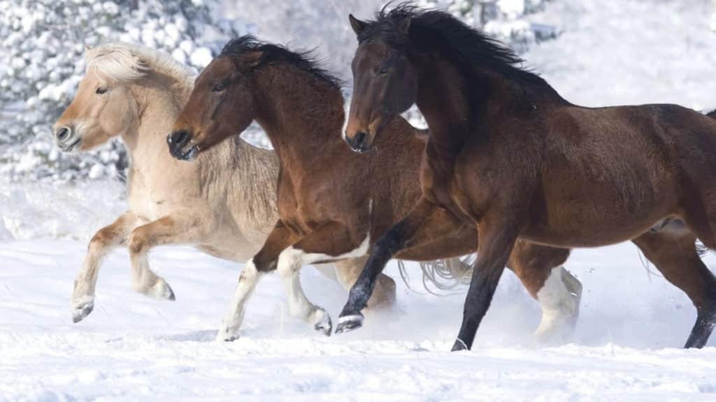 صور خيول منوعة