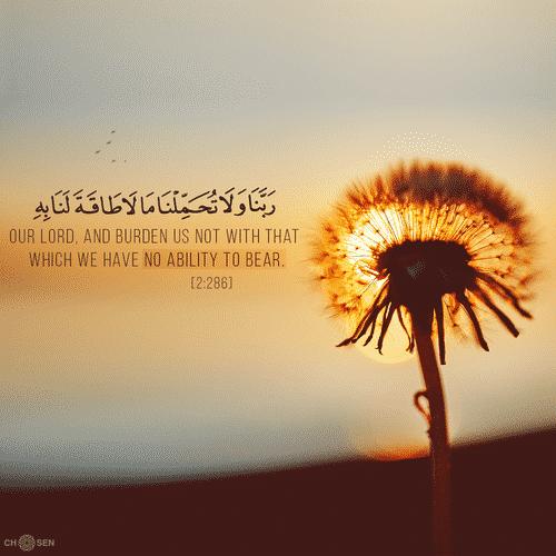 صور اسلامية آيات من القرآن متنوعة