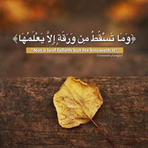 صور اسلامية مكتوب فيها آيات من القرآن روعة