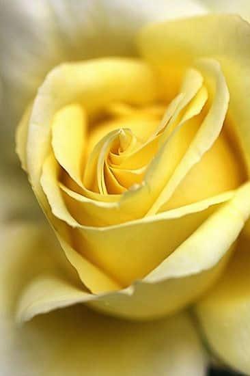 صور جميلة ورد حلو