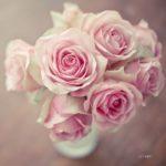 صور باقات ورد جميلة منوعة