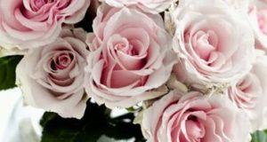 صور حلوه أجمل الورود متنوعة