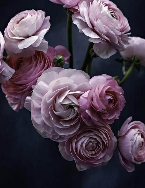 احلى صور اجمل الورود فى العالم