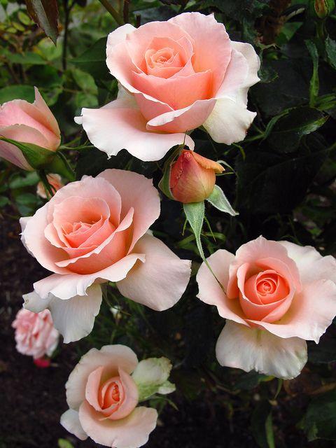 صور للفيس بوك اجمل ورد