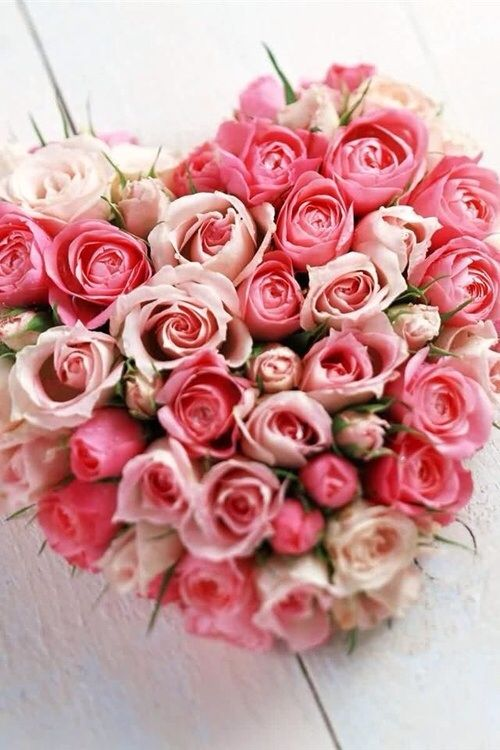 صور عن الورد حلوة