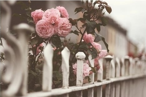 صور ورد رومانسي حلوه